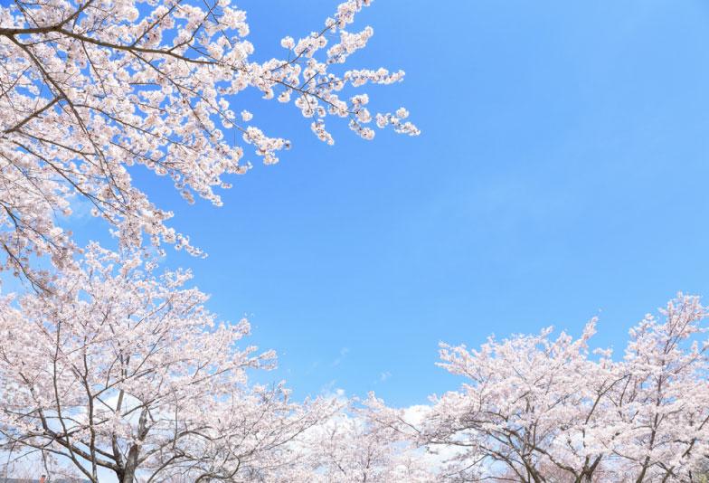 浜松市結婚指輪オーダーメイド桜